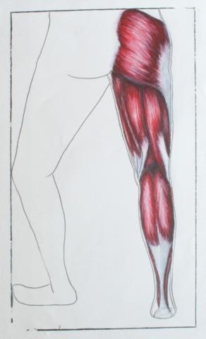 Posterior leg
