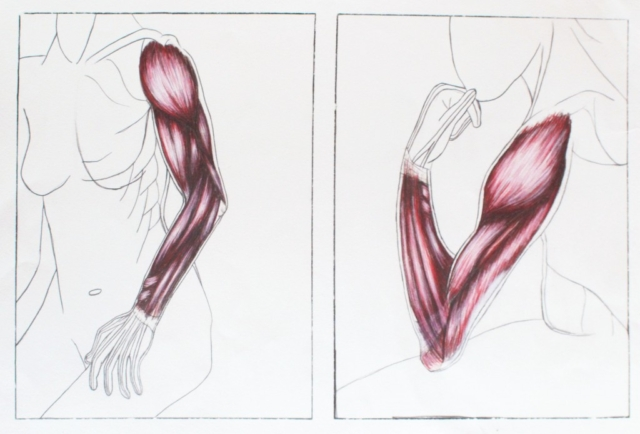 Anterior and lateral arm